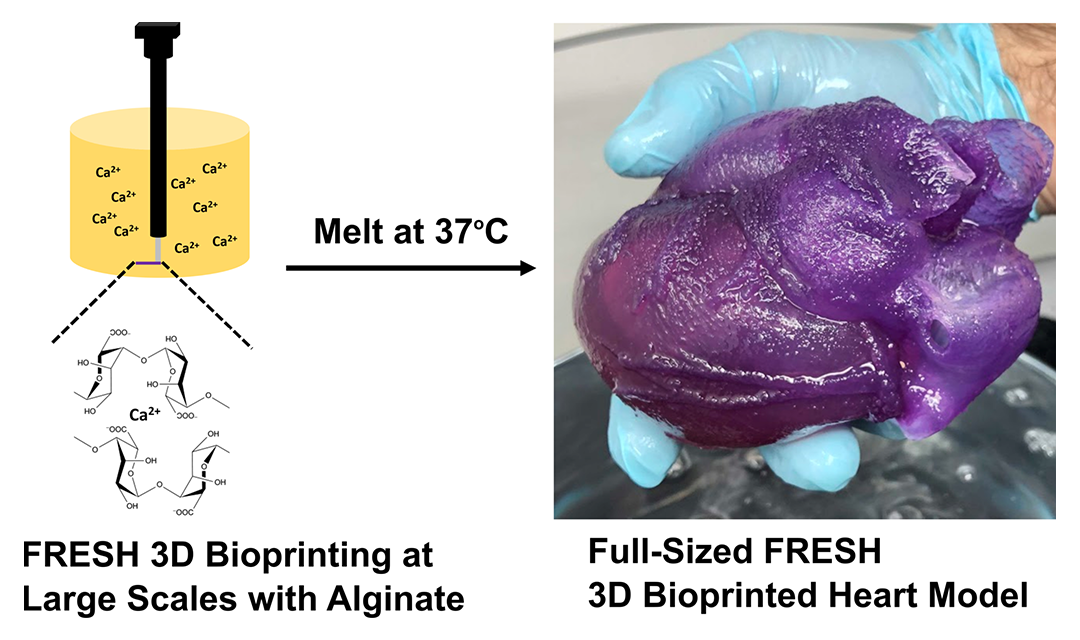 Technical diagram showing how the FRESH 3d bioprinting works