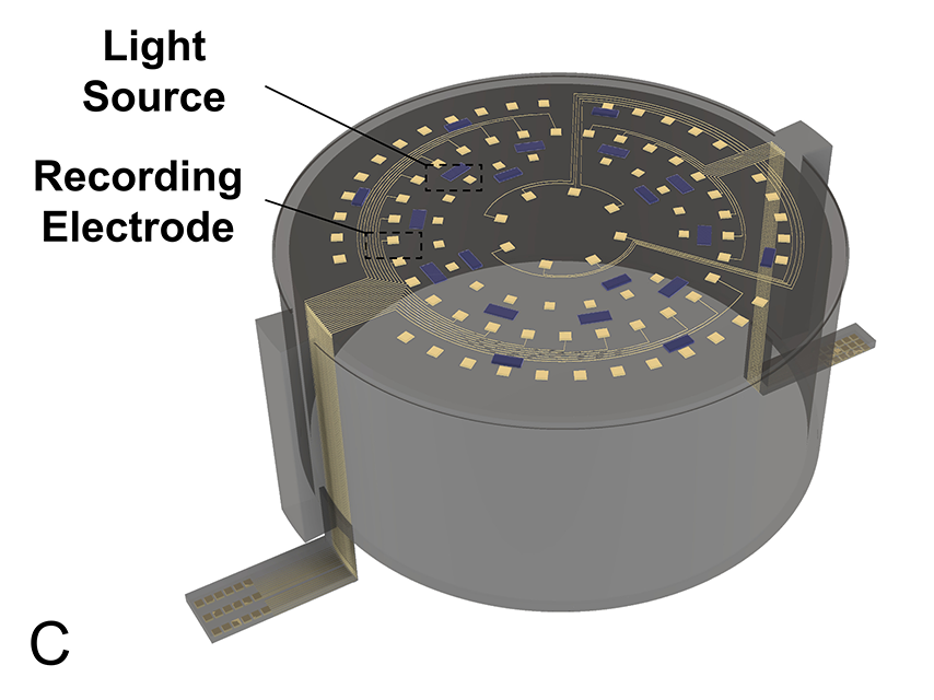 Light source and recording electrode of the dura